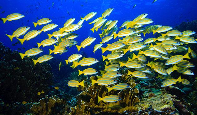 Fish Aid Antibiotics