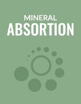 Mineral Absortion