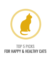 Top 5 Healthy Cats