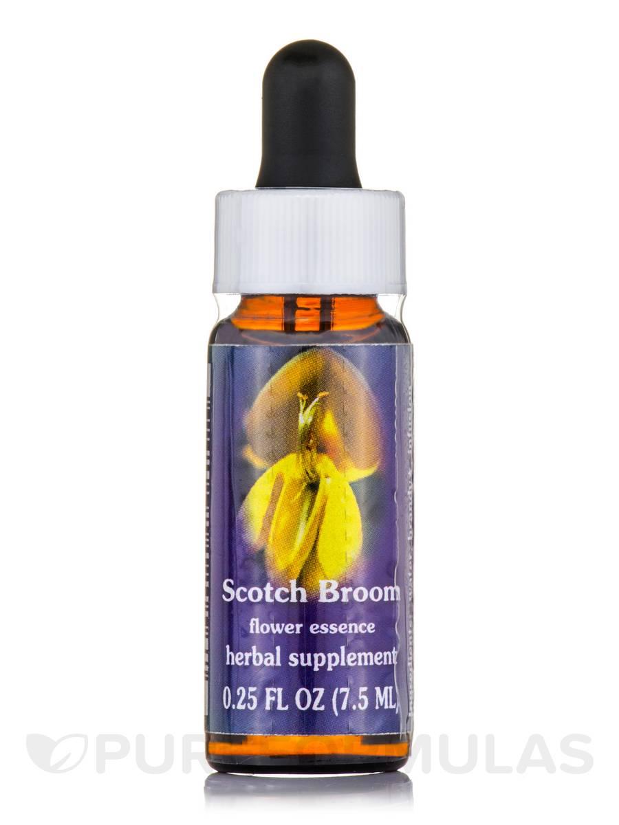 Scotch Broom Dropper - 0.25 fl. oz (7.5 ml)