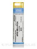 Apis Mellifica 6CH - 140 Granules (5.5g)