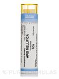 Apis Mellifica 7CH - 140 Granules (5.5g)