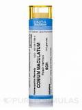 Conium Maculatum 6CH - 140 Granules (5.5g)
