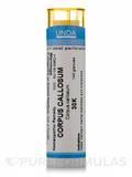 Corpus Callosum 30K - 140 Granules (5.5g)