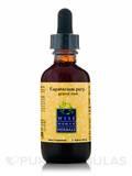 Eupatorium Purpurea (Gravel Root) - 2 fl. oz (60 ml)