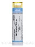 Kalmia Latifolia 7CH - 140 Granules (5.5g)
