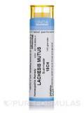 Lachesis Mutus 15CH - 140 Granules (5.5g)