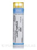 Lilium Tigrinum 200K - 140 Granules (5.5g)