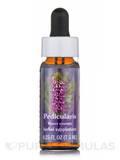Pedicularis Dropper - 0.25 fl. oz (7.5 ml)