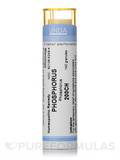Phosphorus 200CH - 140 Granules (5.5g)