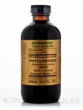 Phyllanthus Herb (Phyllanthus) 250 mL