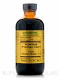 Plantain (Plantago major) 8.4 oz (250 ml)