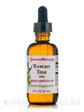 Rowan Tree Sorbus Domestica 1DH 2 oz (60 ml)