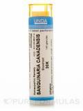 Sanguinaria Canadensis 30K - 140 Granules (5.5g)