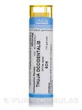 Thuja Occidentalis 5CH - 140 Granules (5.5g)