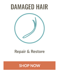 https://i3.pureformulas.net/images/static/200X200_Natural_Hair_Care_Hair_Type_Damaged_Hair.jpg