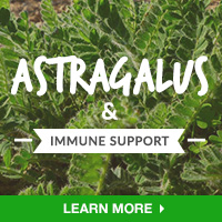 Immune Interest - Category Drop Down Bottom 200x200 - Astragalus- 101315