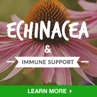Immune Interest - Category Drop Down Bottom 200x200 - Echinacea- 101315