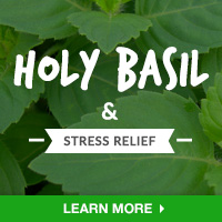 Stress Relief Interest - Category Drop Down Bottom 200x200 - Holy Basil - 091015