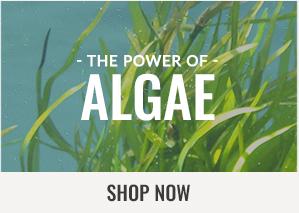 300x213 - Generic - Power of Algae - 100316