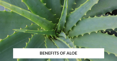 Benefits of Aloe