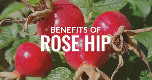 Benefits of Rosehip