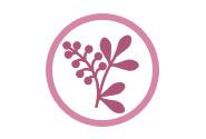 Herbals for Focus