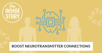 The Inside Story: Boost Neurotransmitter Connections