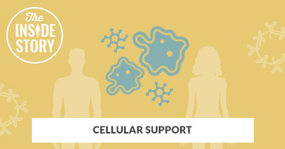 The Inside Story: Cellulart Support
