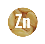 Zinc works as one of the most important minerals for immune system support.